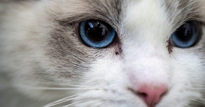 gattino che regala un gioco della buonanotte ai suoi padroni