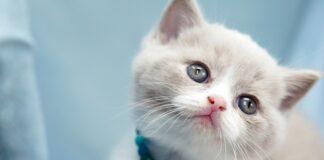 gattino che si impossessa del lettone dei suoi padroni