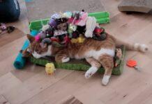 gattino che viene coperto dai giocattoli
