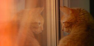 gattino e alce si incontrano alla finestra