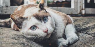 gattino è innamorato della coppia che gli ha salvato la vita