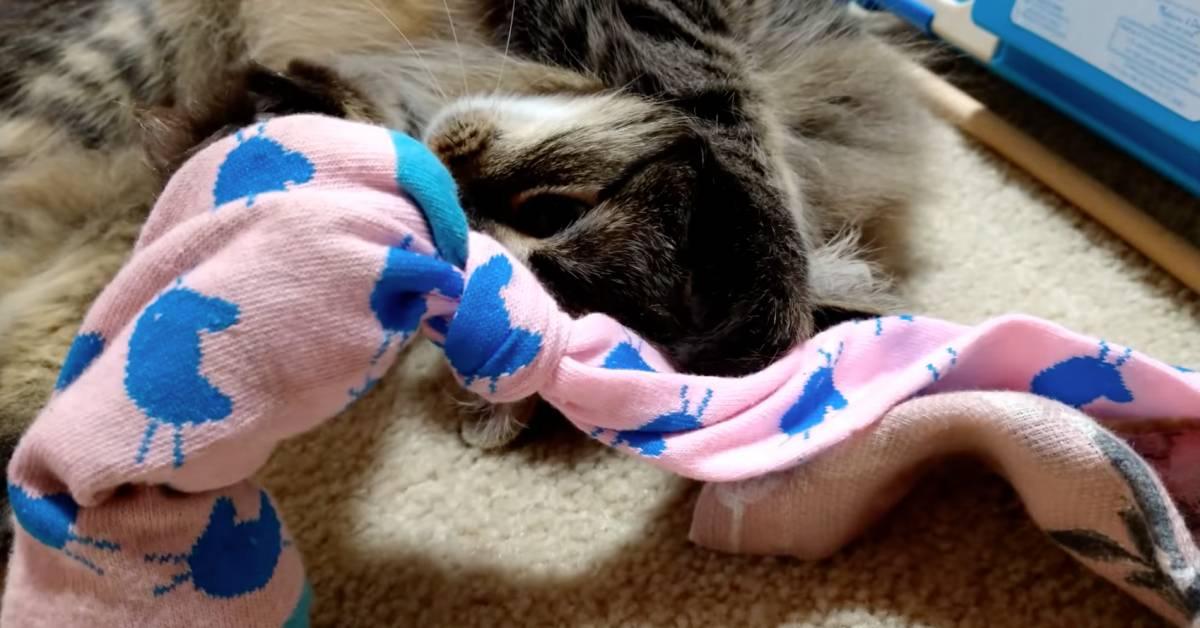 gattino e calzino
