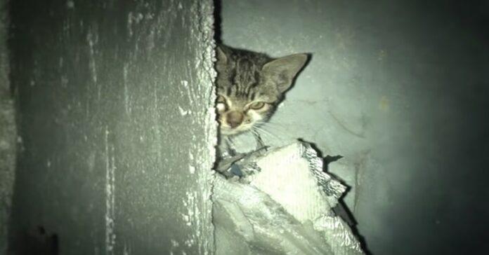 gattino triste grigio