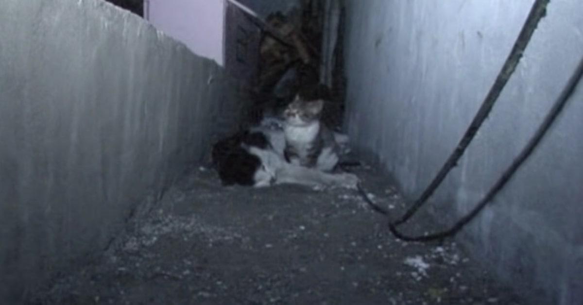 gattino con padre morto