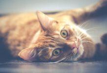 gattino più triste del mondo