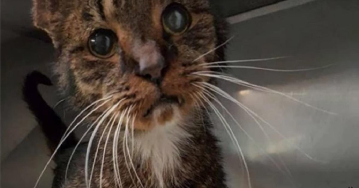 gattino randagio adottato a 15 anni dal veterinario