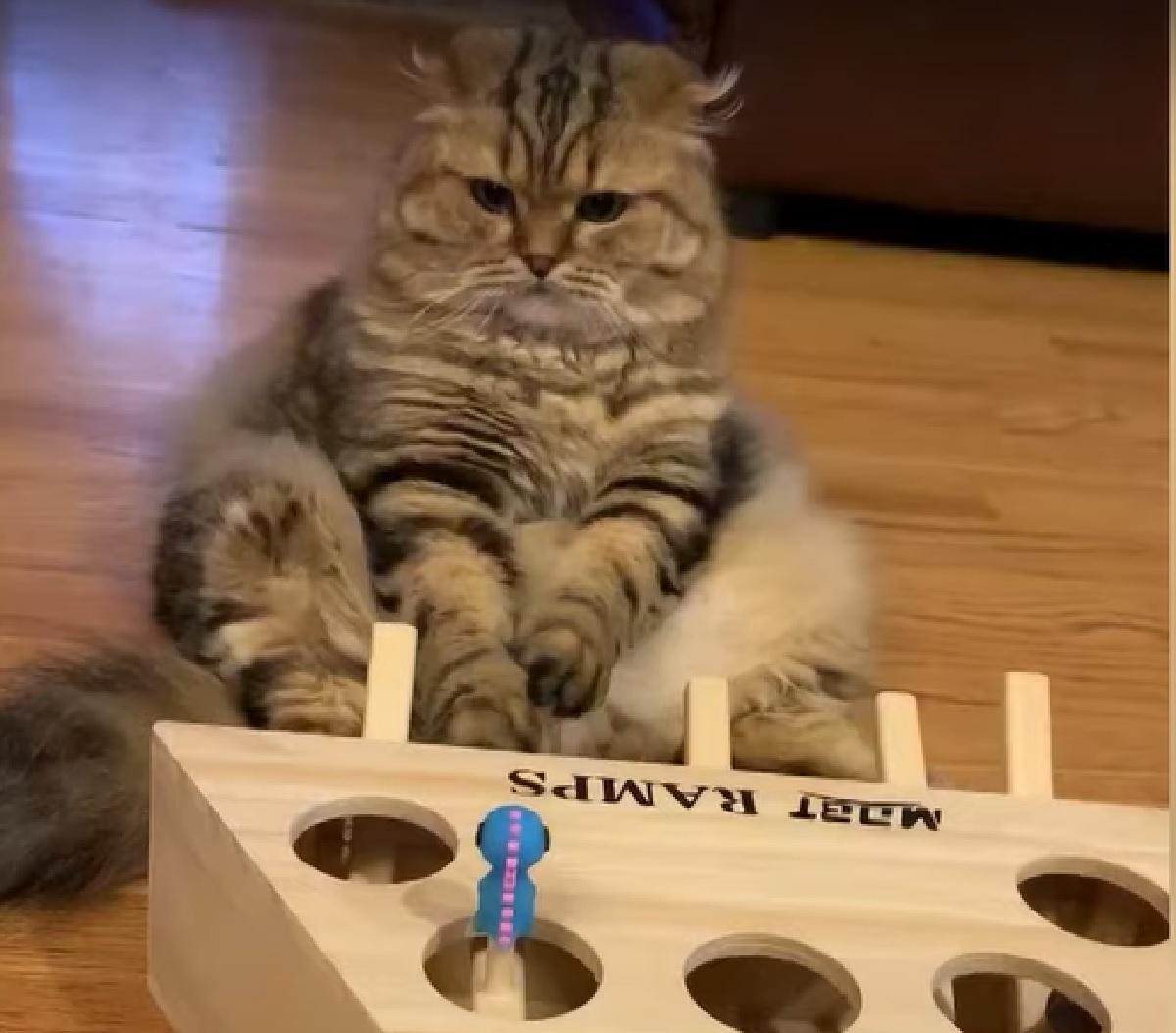 georgie gattino si arrende prima di giocare