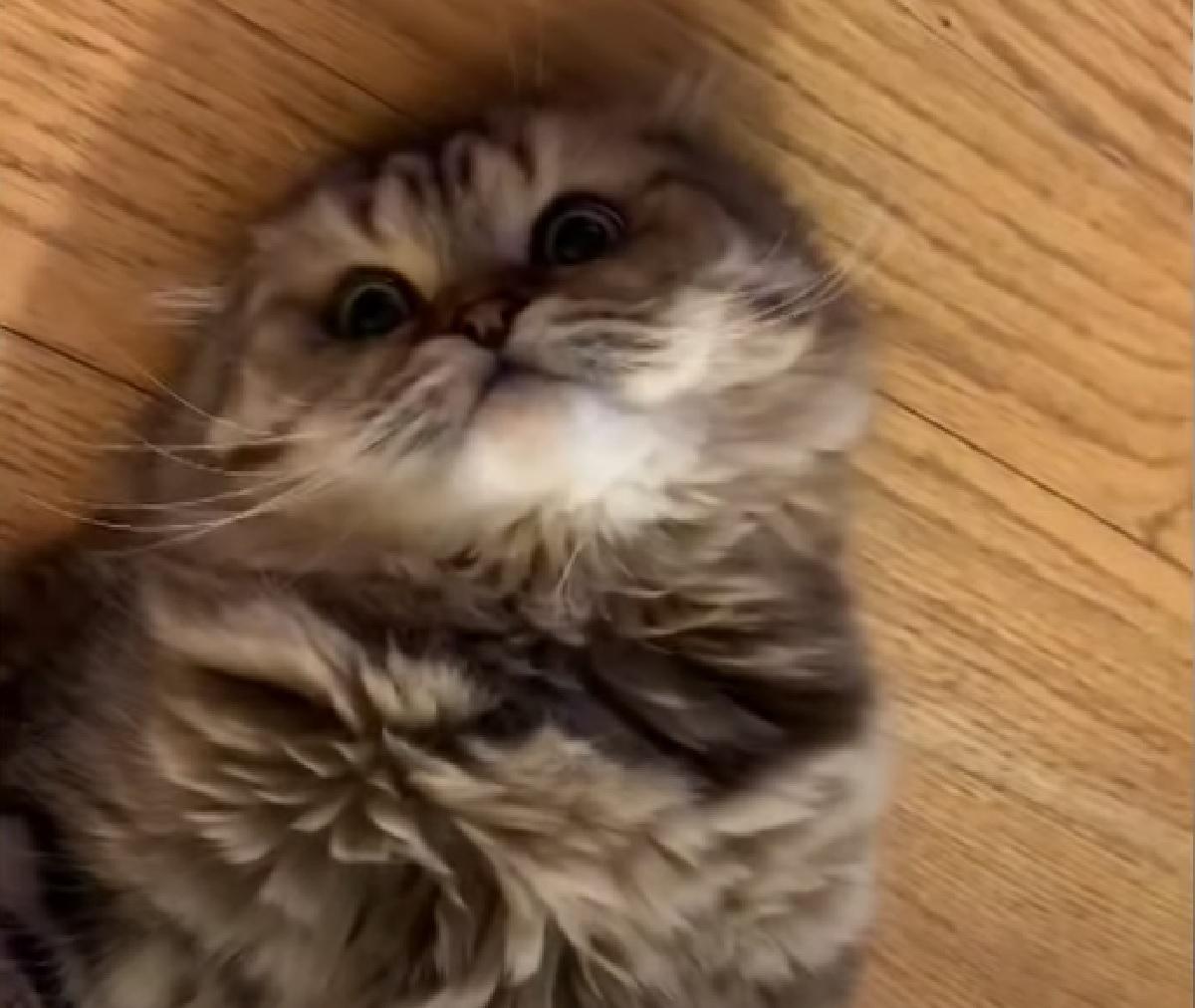 georgie gattino si getta all'indietro