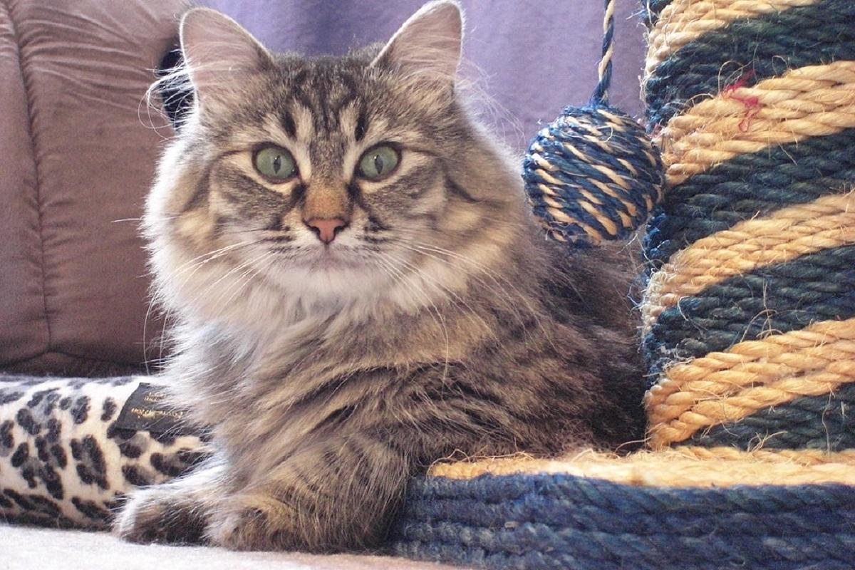 gatto con occhi spalancati