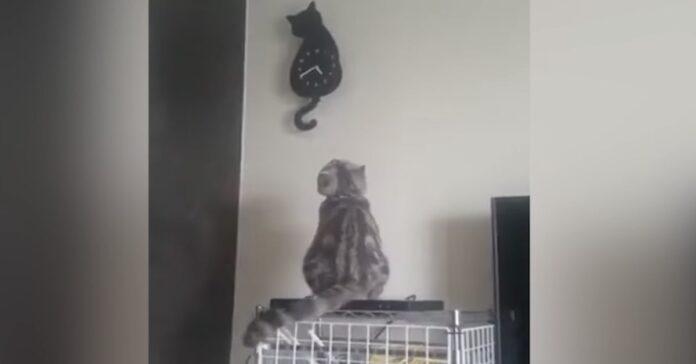 gatto imita un orologio a forma di gatto