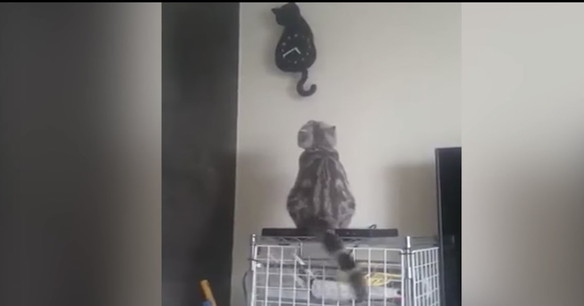 gatto fa gli stessi movimenti di un orologio