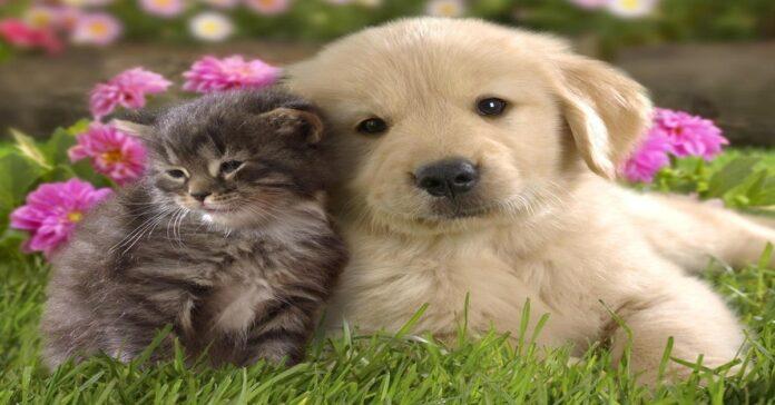 cucciolo di cane e gattino