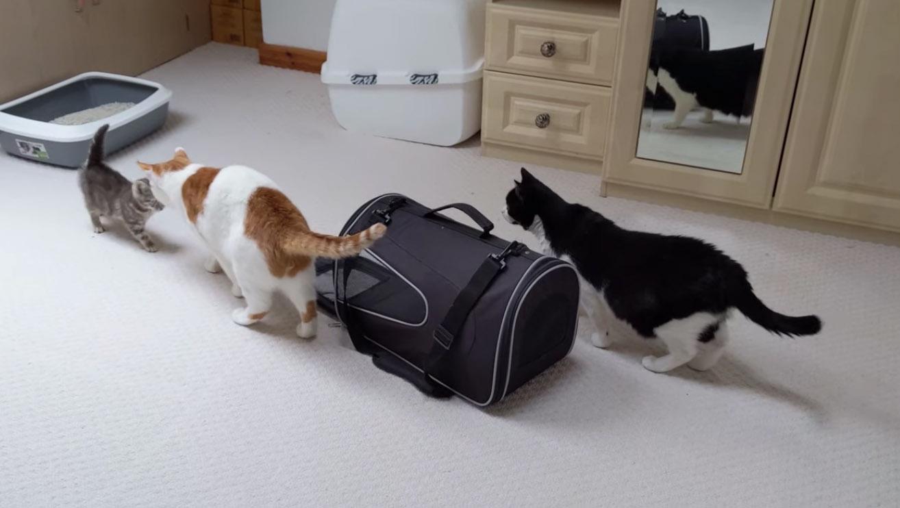 gatti e gattino