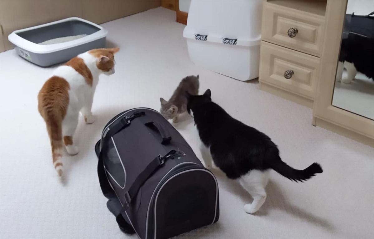 gatti e gattino che si conoscono