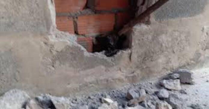 gatto salvato intrappolato in blocco di cemento