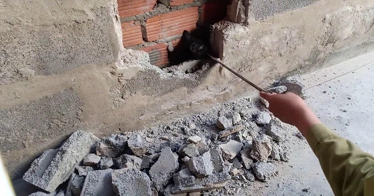 gatto intrappolato nella parete salvato in Vietnam