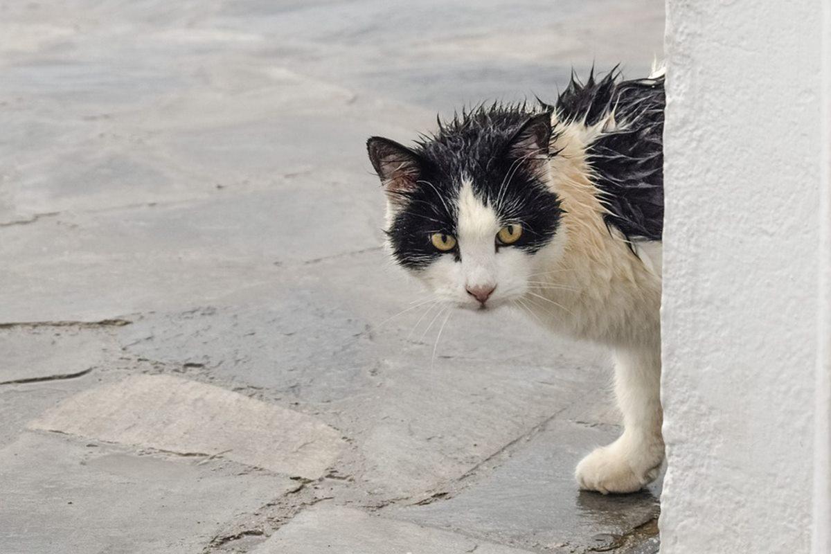 gatto tutto bagnato