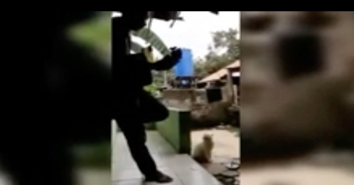 uomo suona chitarra e gatto miagola