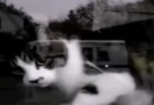 gatto aspetta il postino