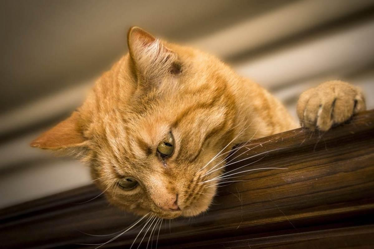 gatto sopra l'armadio