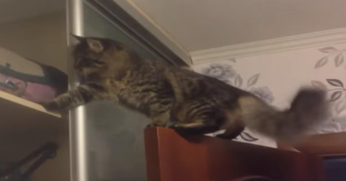 gatto fa una birichinata