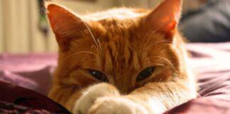 gatto che dorme sempre