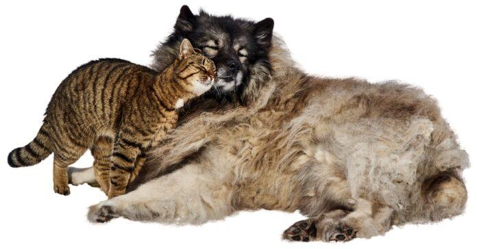 gatto e cane si fano le coccole