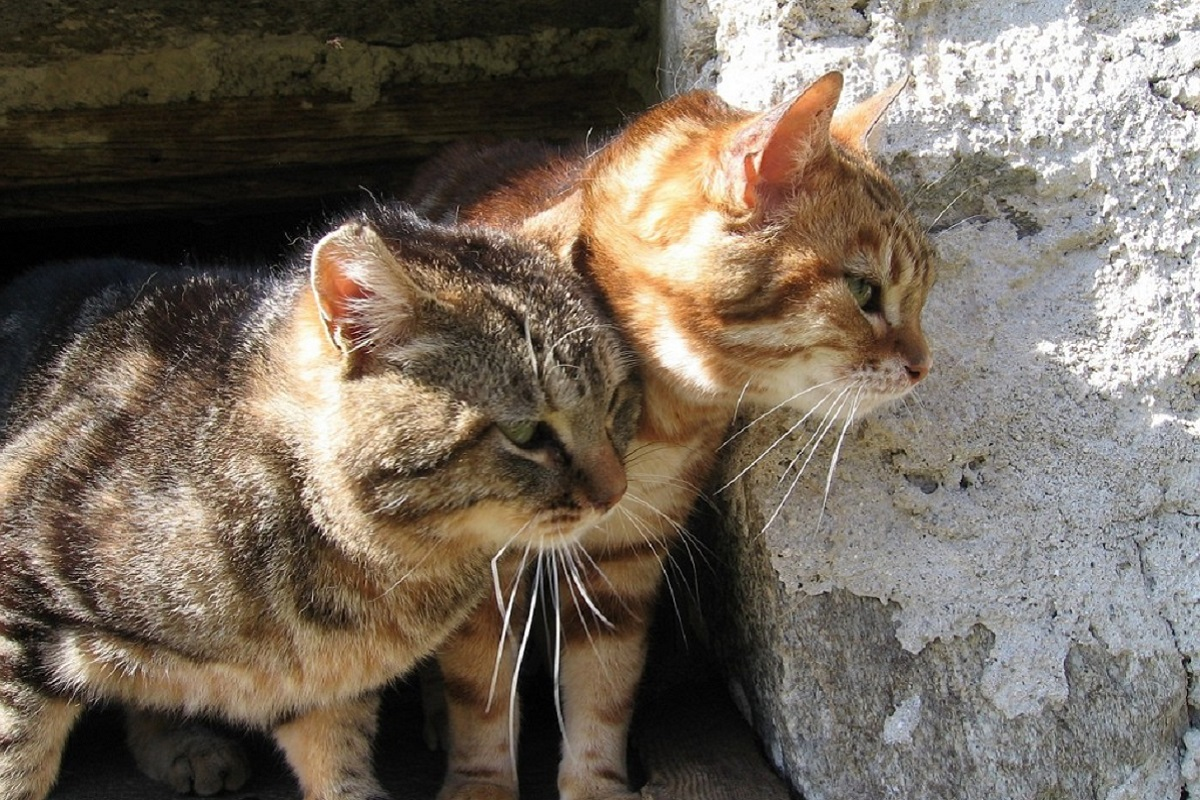 gatti in allerta