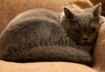 gatto a disagio