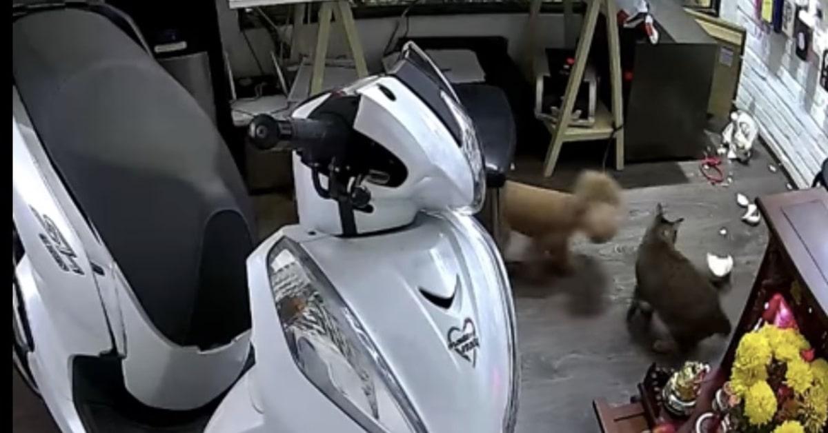 gatto distrugge statuetta e i suoi amici vedono cosa è successo