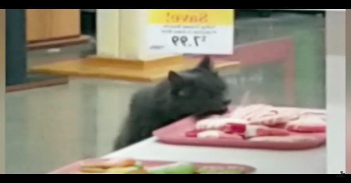 Carlos gatto goloso ladro di biscotti