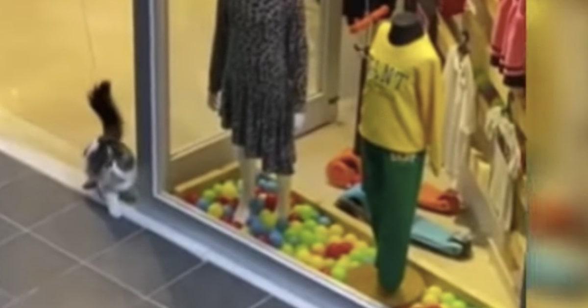 gatto entra nel negozio per rubare pallina