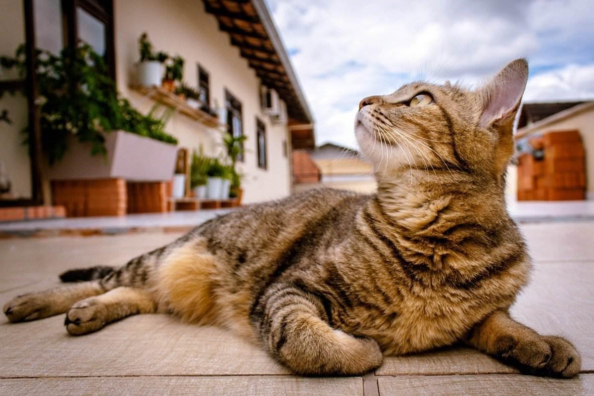 gatto disteso nel cortile di casa