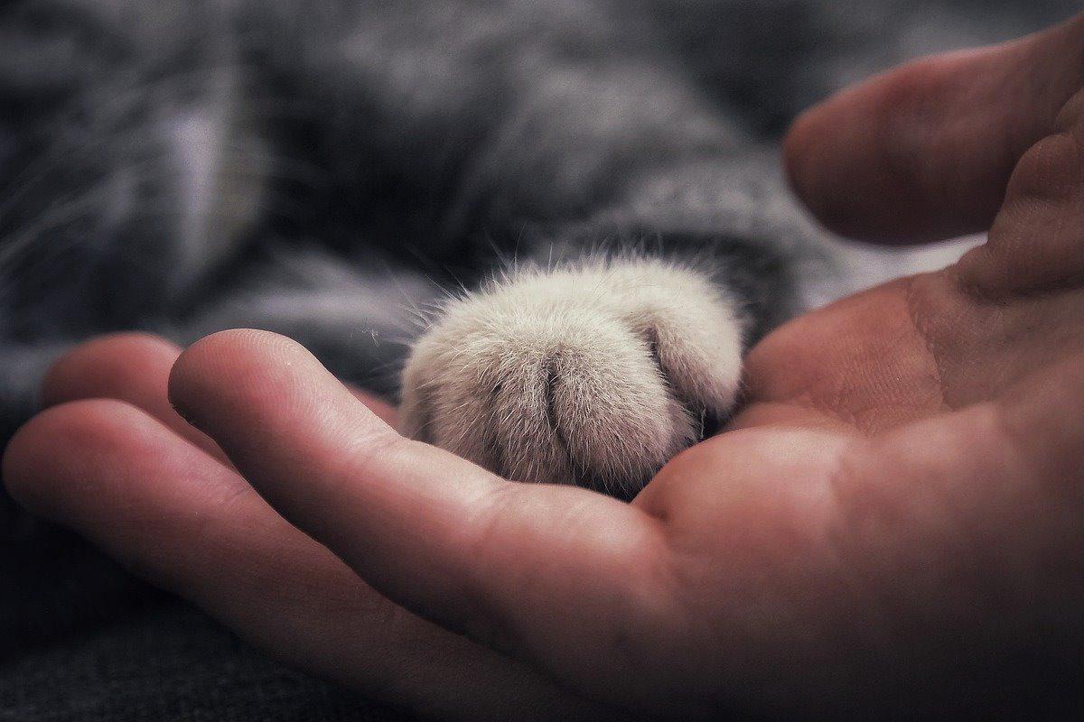 zampa del gatto sulla mano della persona