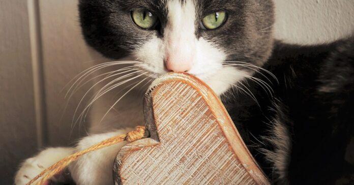 gatto con una decorazione a forma di cuore