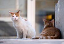 due gatti per strada