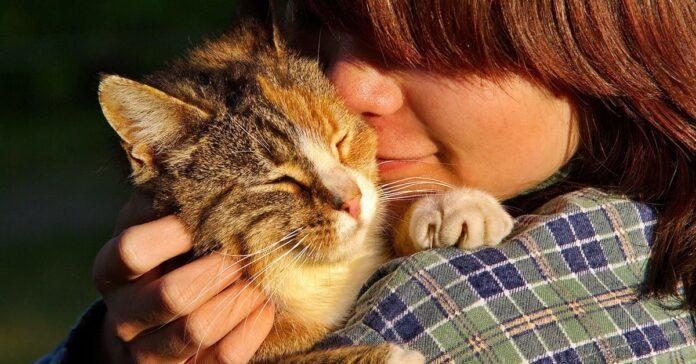 gatto in braccio a una ragazza