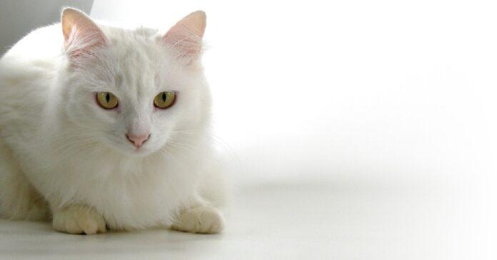 gattino bruno dopo aver assaggiato un cucchiaio gelato video