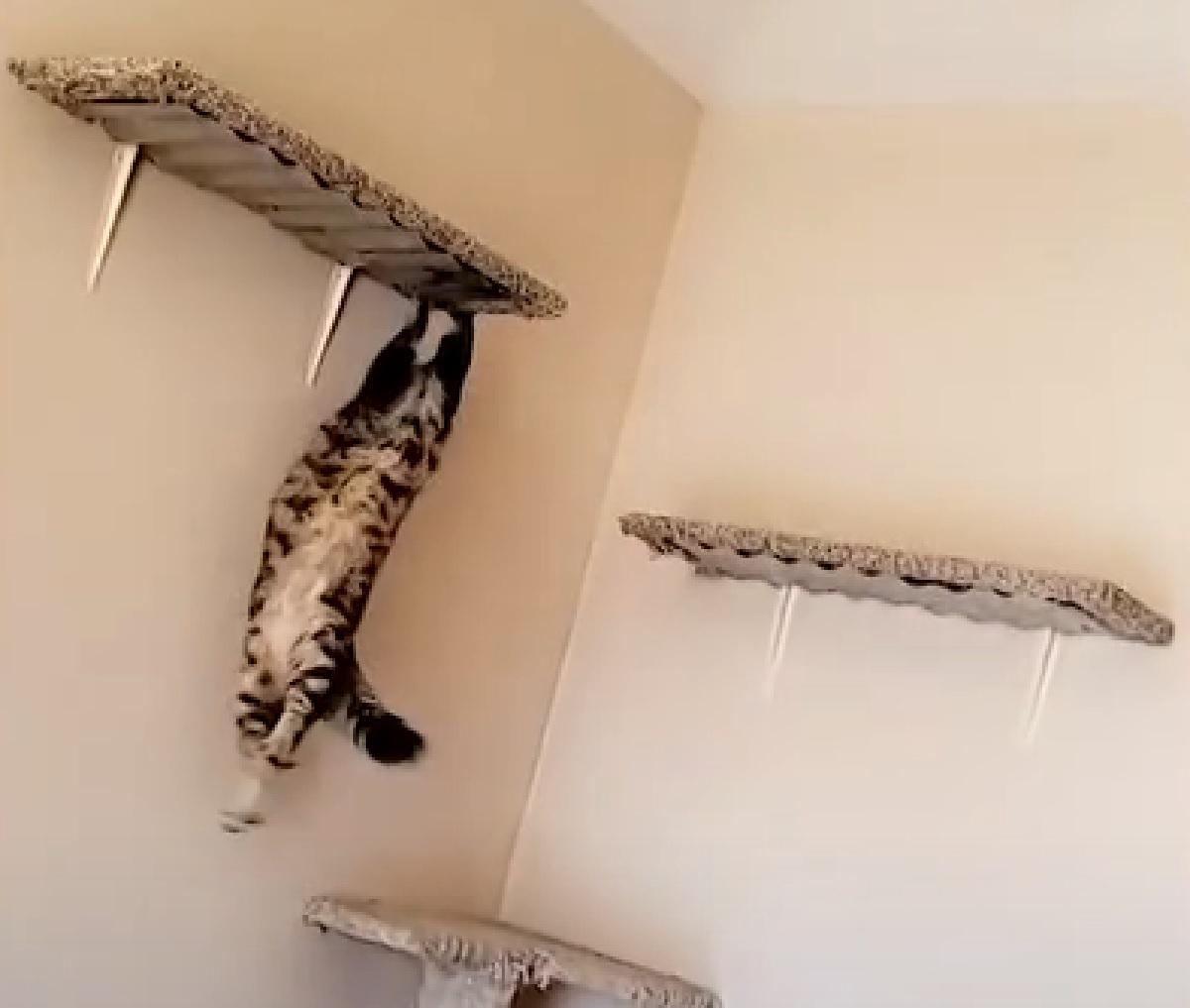 squirrel gattino non afferra mensola