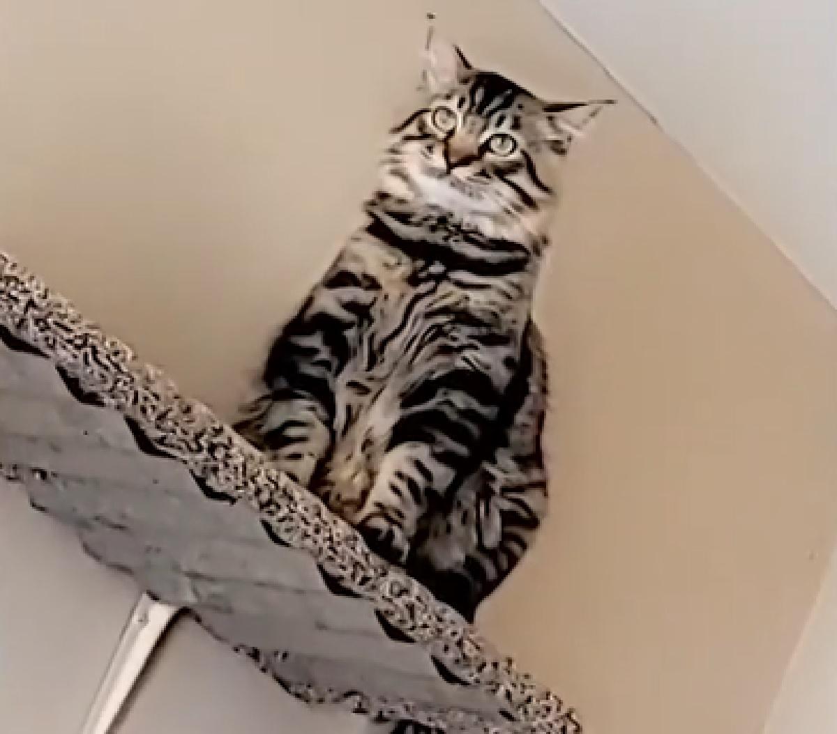 squirrel gattino celtico espressione