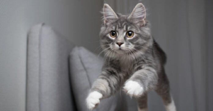 gattino celtico salto scenografico video qualcosa va storto