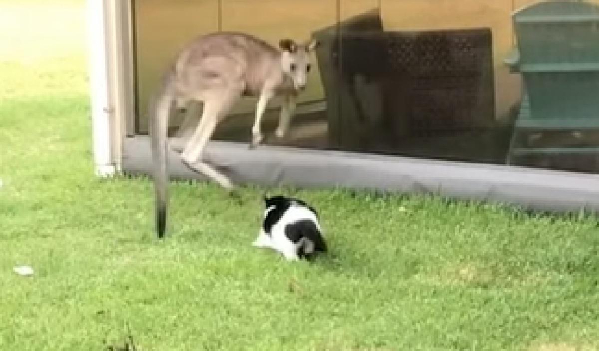 delta gattino difesa territorio