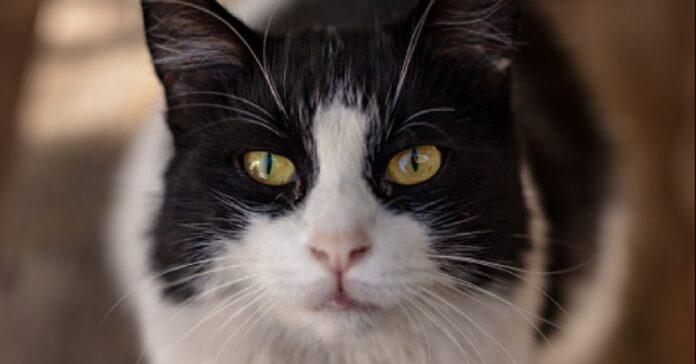gattino delta decide di affrontare canguro video incollati schermo