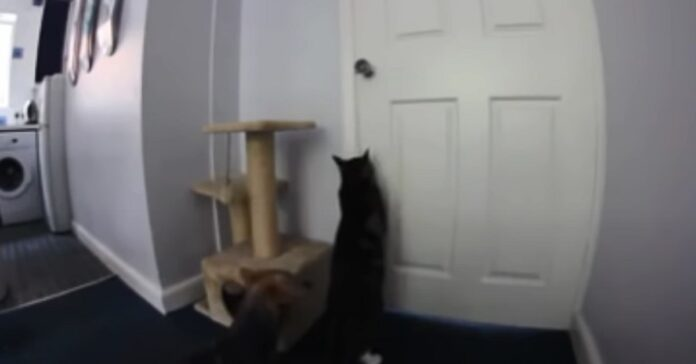 gattino fuga scappa