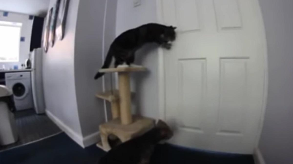 micio porta apre