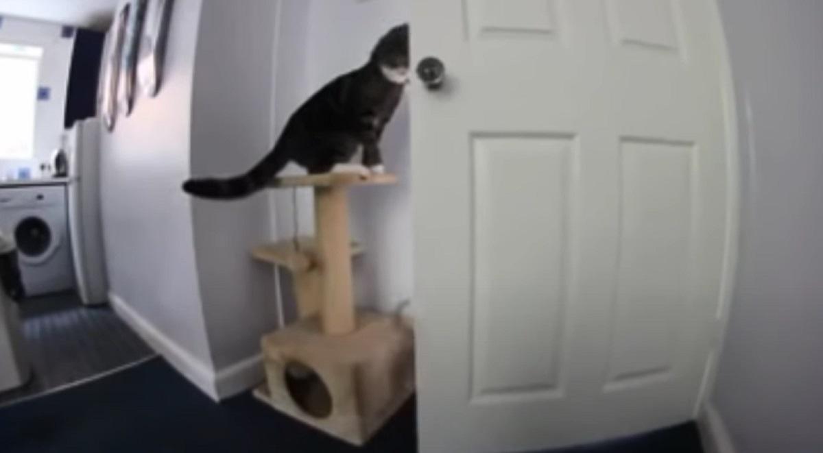 piano riuscito gatto