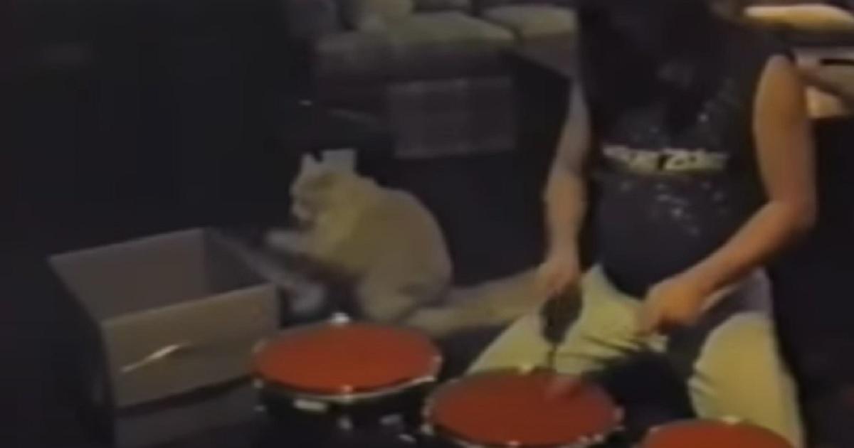 micio suonare batteria