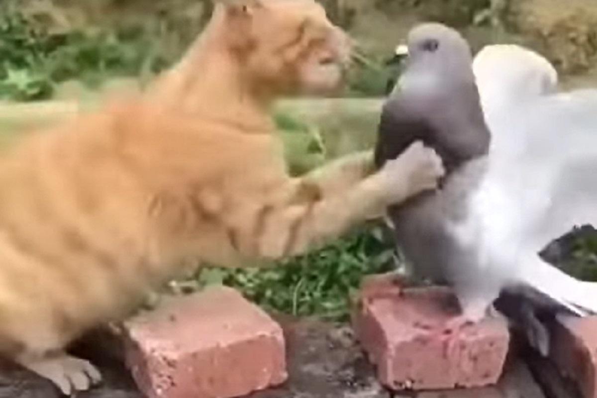 lotta amici buffa