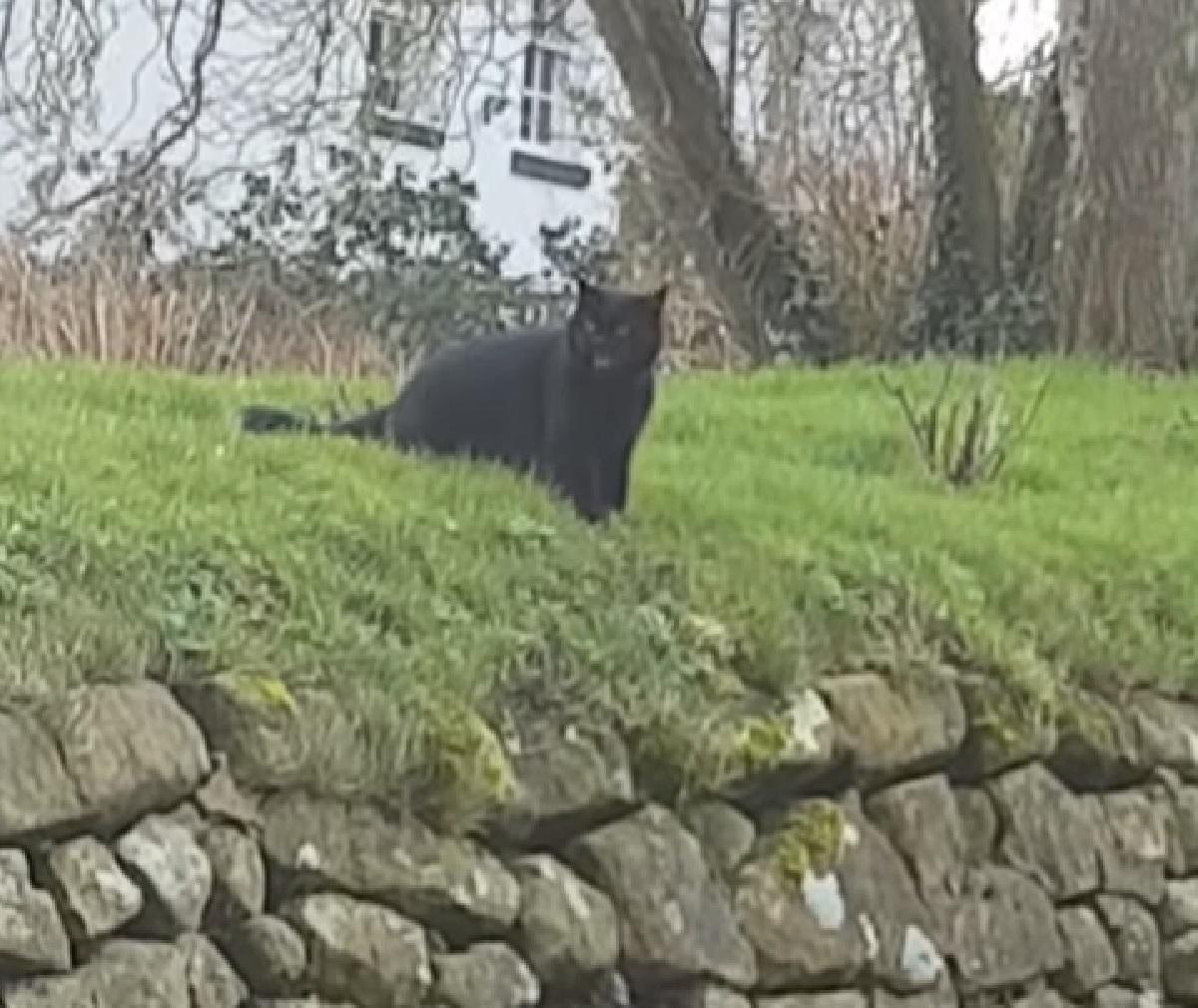 gattino simon sherratt videocamera in mano