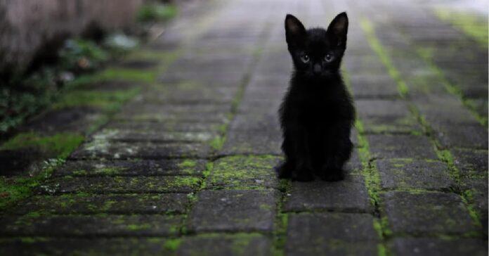 gattino europeo decide davanti chiesa video